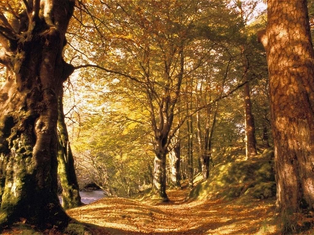 immagini bosco in autunno, erba secca, foglie cadute, ambiente marrone, seccume, alberi spogli, natura dormiente