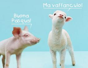 Maialino che dice ad un agnello buona Pasqua