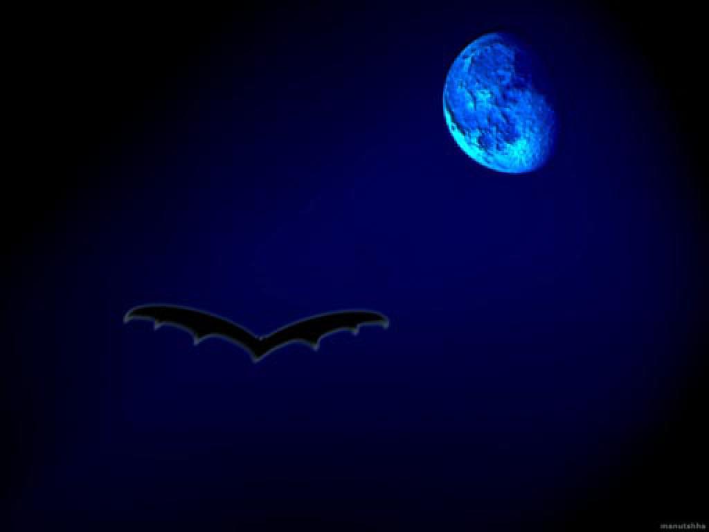 Notte, oscurità, 31, ottobre, pipistrello