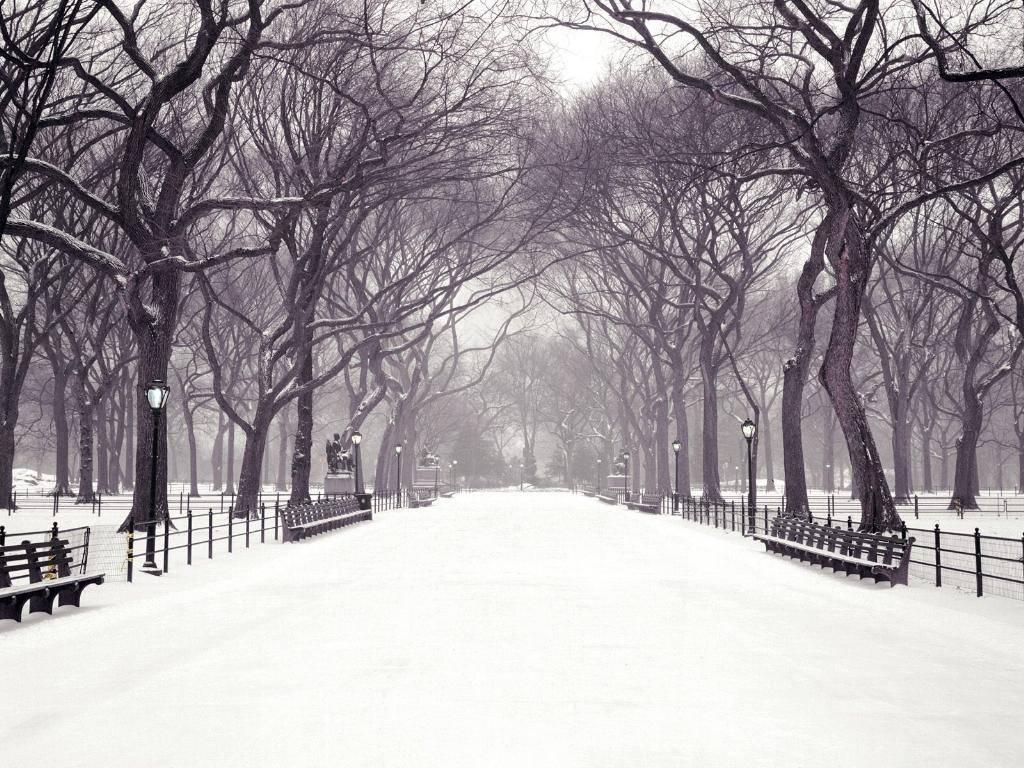 Parco, viale, bianco, neve, gelo
