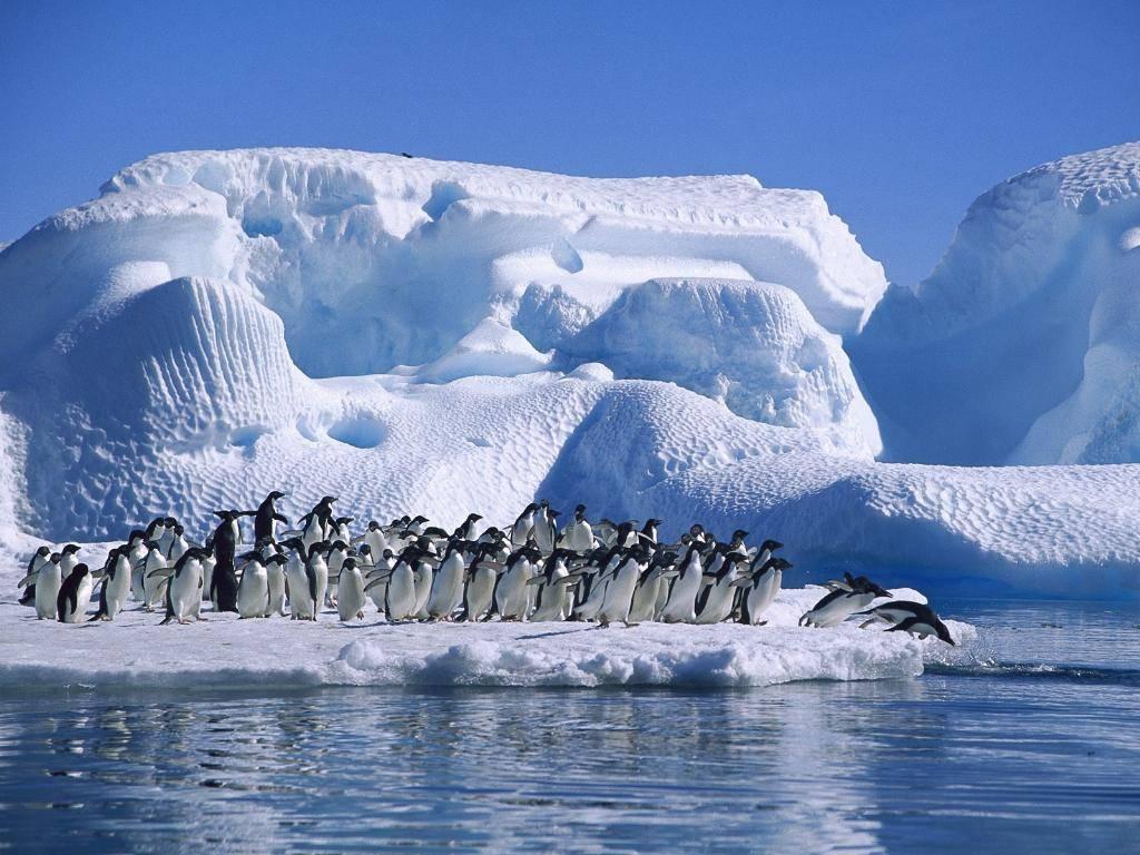 Pinguini, antartide, iceberg