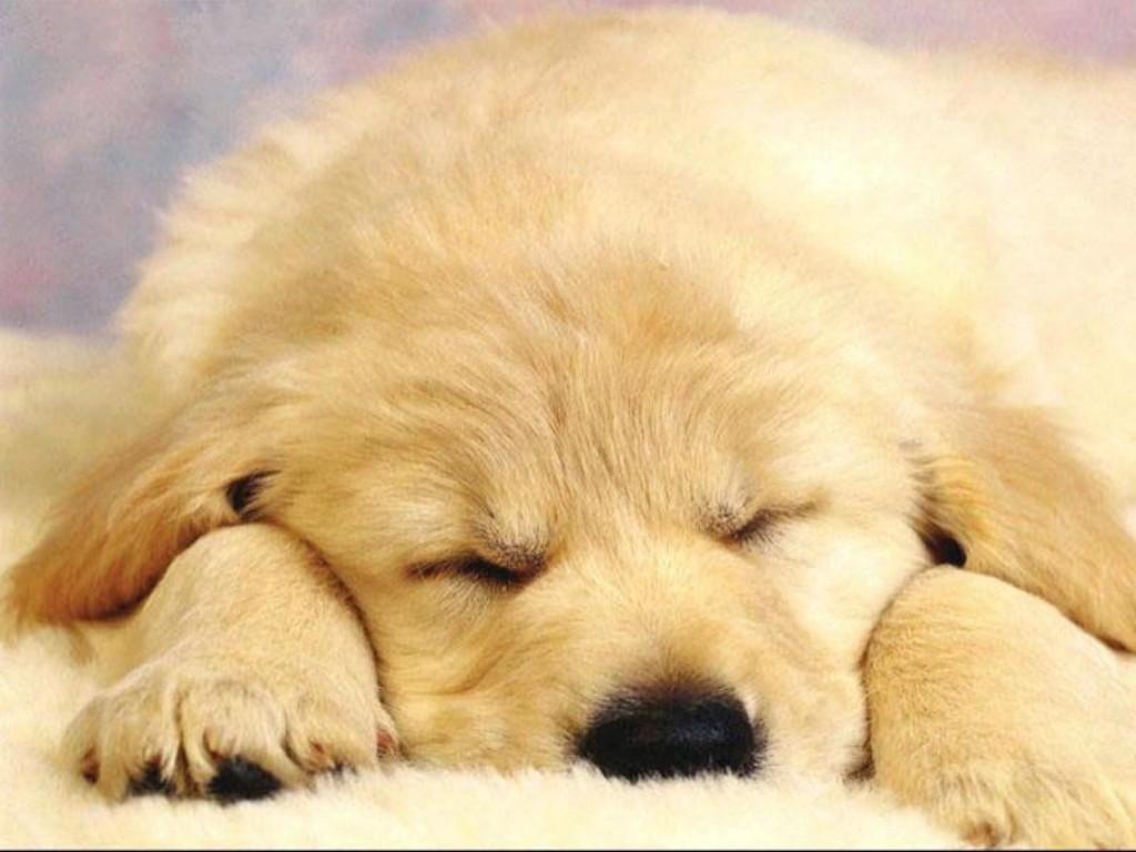 cane, dormiglione, riposino