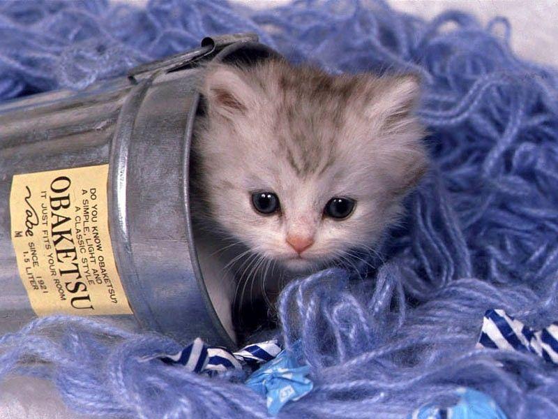 gattino, micio, nascosto