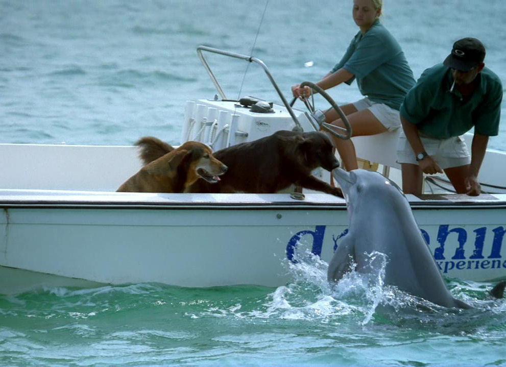 cane, delfino, bacio