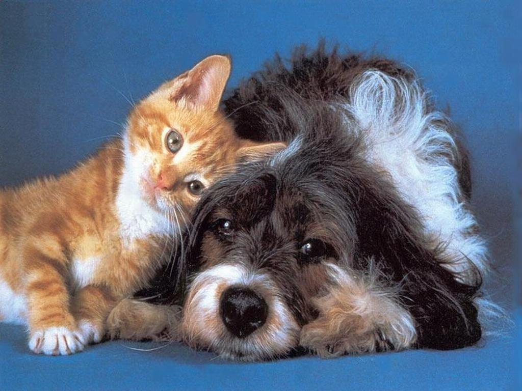 cane, gatto