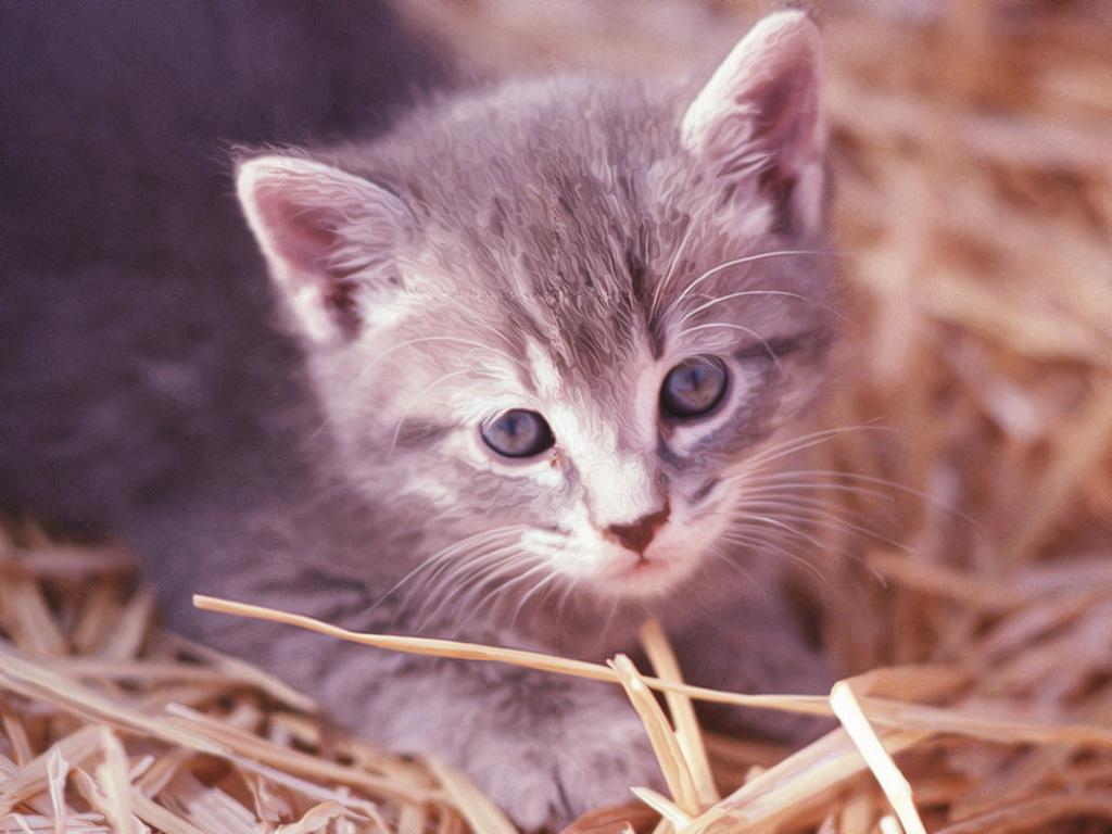 gattino, curioso, tenerezza