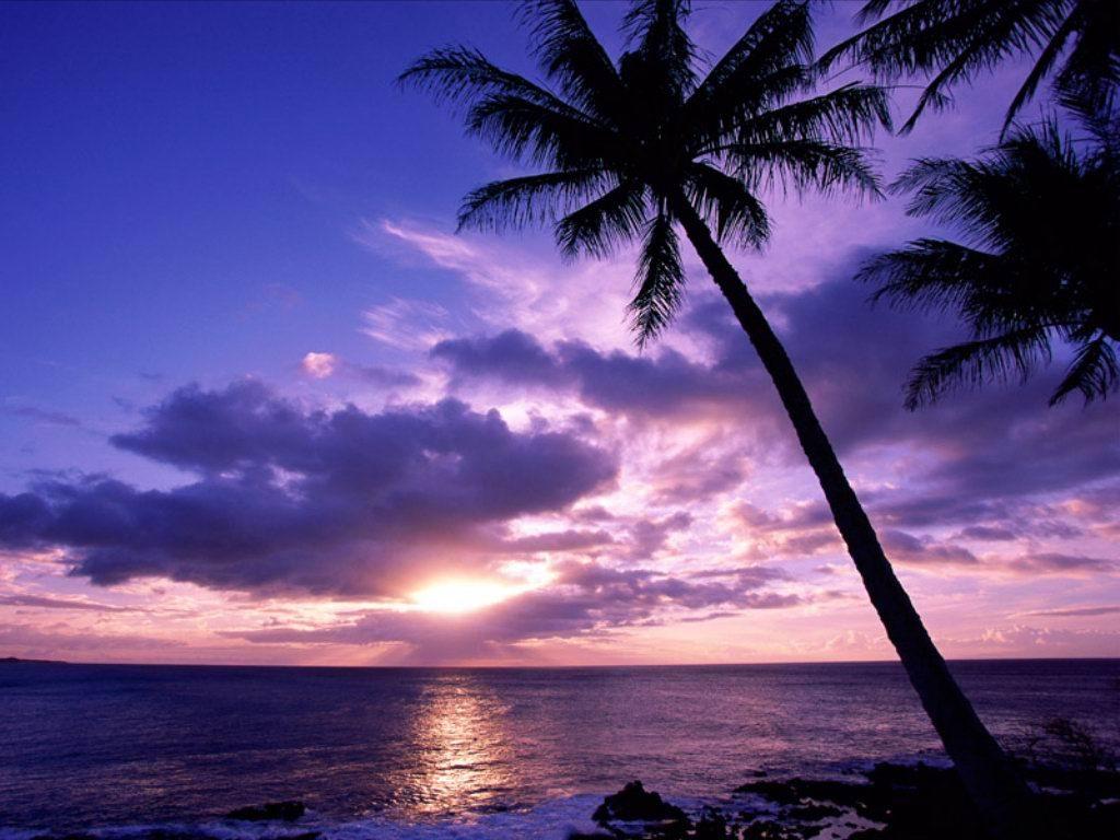 isola, palme,  mare, sole, incanto, tramonto, paradiso