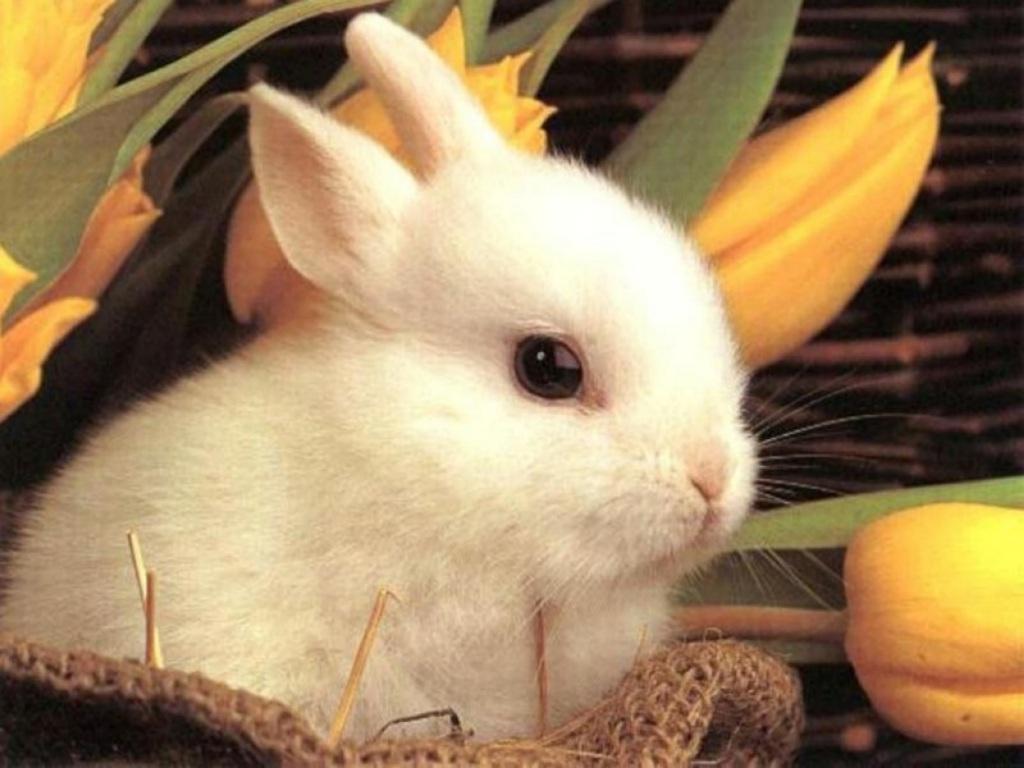 pasqua, uova, coniglietto, simbolo